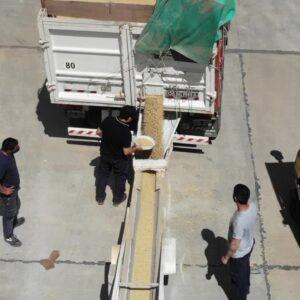 Consolidación de contenedores con soja a granel